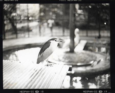 jyoyama_zoo.jpg