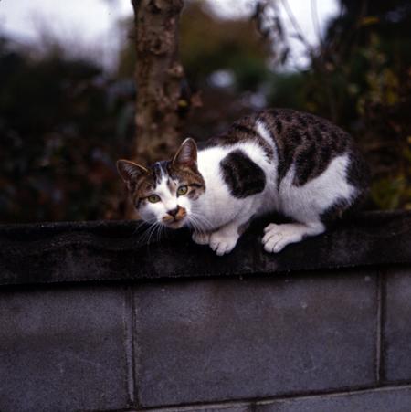 miwa_cat2.jpg